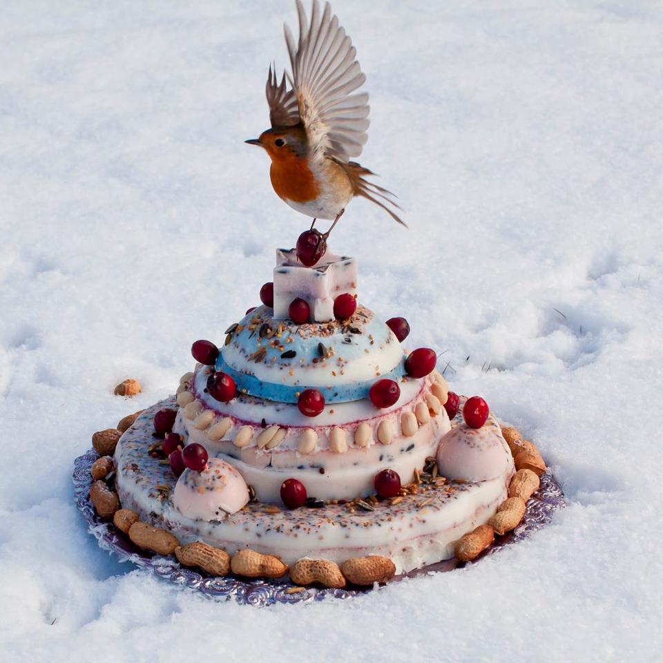schrijf u in voor de nieuwsbrief en maak kans op 1 van de 3 originele vogeltaarten