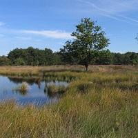 Groene omgeving omgeving Den Bosch, regio Vught